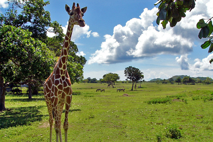 Calauit Safari, Palawan